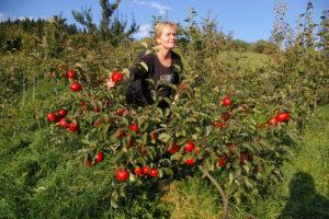 mama oberá jablká, Júlia Adamcová