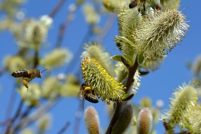 Vŕby na včelnici