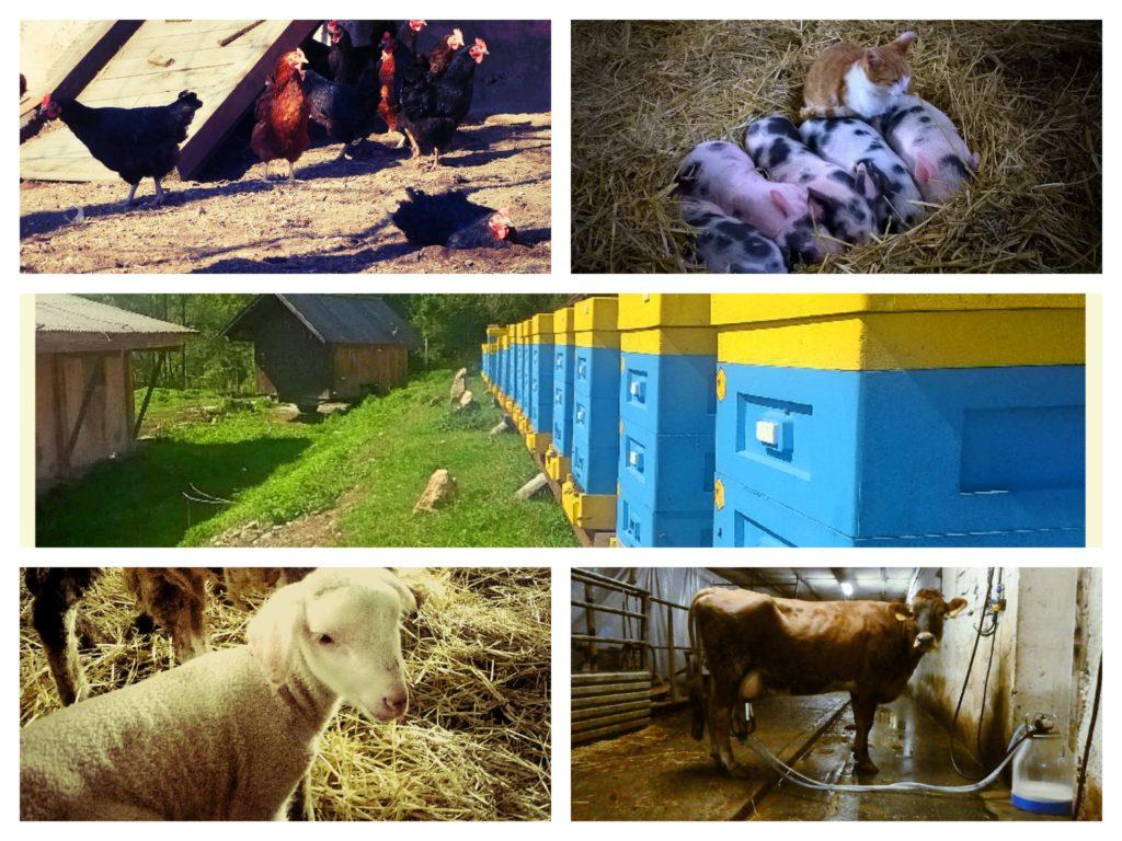 13 mesiacov na farme v Sedliackej Dubovej