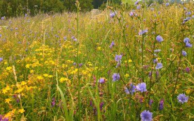 Včelárske rastliny.